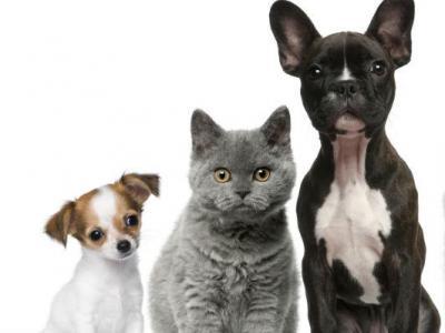 Imagem mostra cães e gato