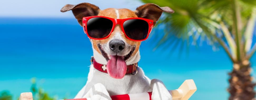 Confira estas dicas para o seu pet passar o verão com saúde