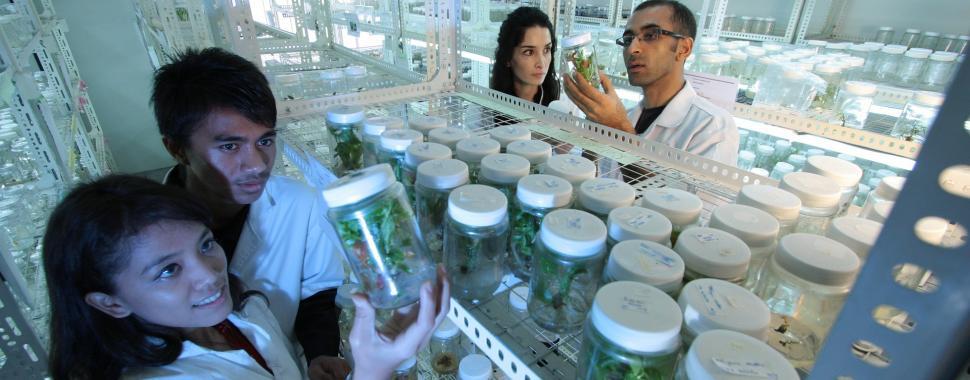 Apesar de parecer uma profissão recente a biotecnologia existe no dia a dia há séculos. Foto: Pixabay