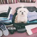 A saudade do animalzinho aperta e grande parte dos donos prefere levar o bichinho junto. Fotos: Shutterstock