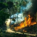 4 filmes que te fazem refletir sobre preservação das florestas/Divulgação