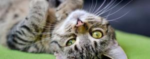 Gatos precisam de cuidados especiais. Foto: Pixabay
